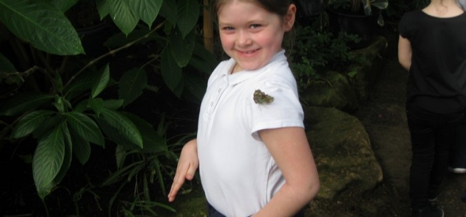 Photos of Year 1 Butterfly Farm trip