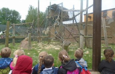 Year 2's trip to Twycross Zoo