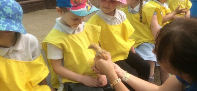 Photos of Nursery's trip to Hatton Country World